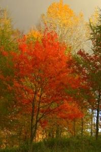 polanow-jesien