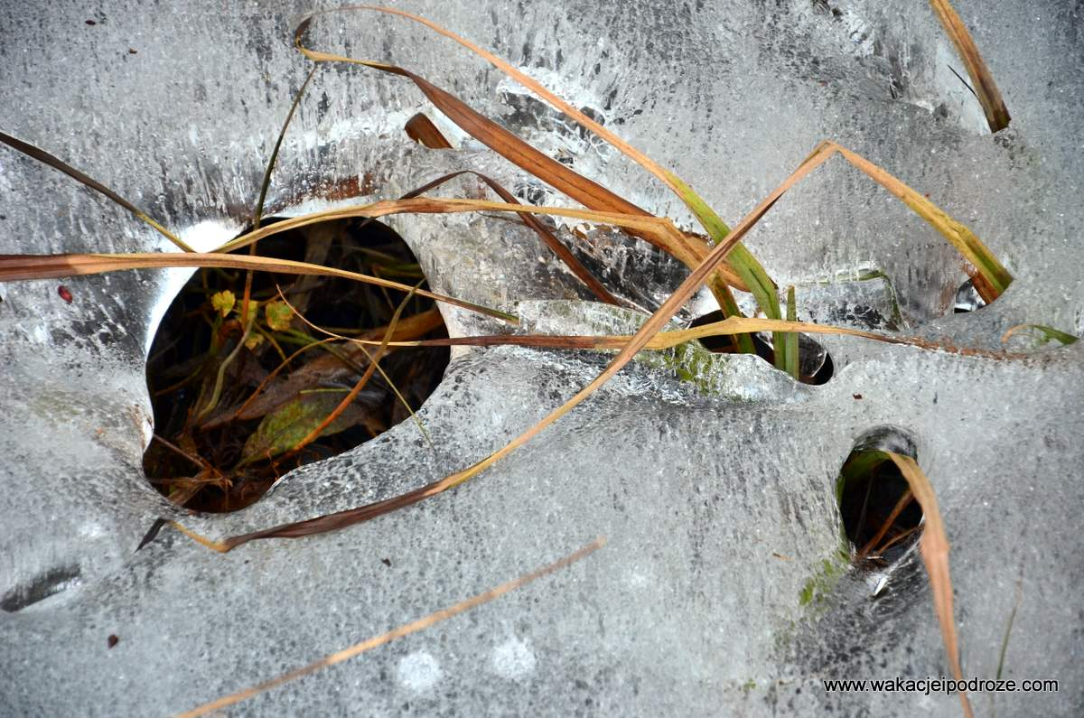wiosna-zdjecia (2)