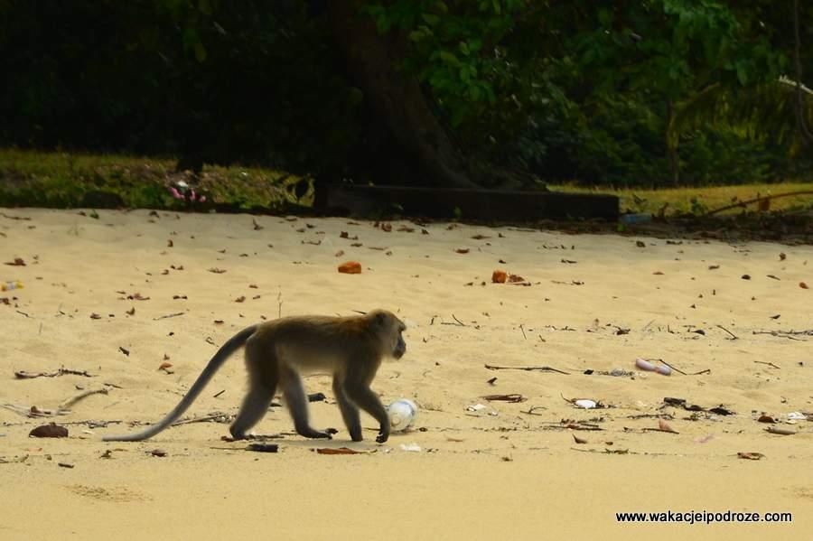 Plaże na wyspie Pangkor