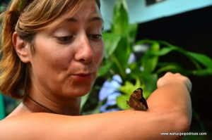 Kuala Lumpur Park Motyli