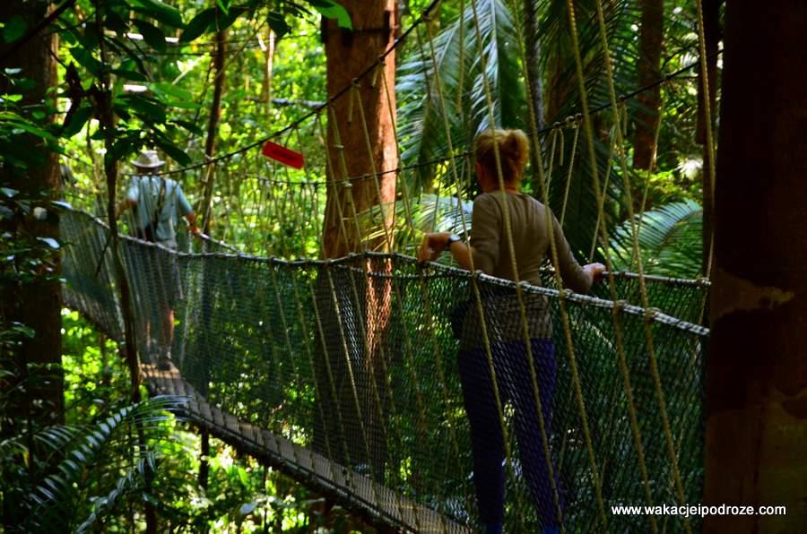 Wiszące mosty w Taman Negara