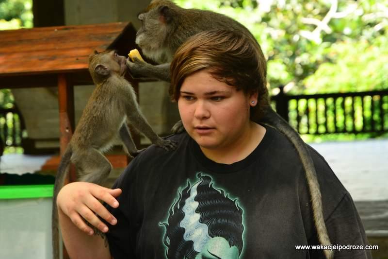 Małpy - Bali