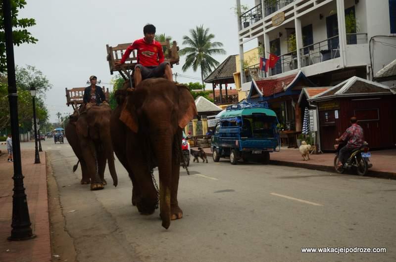 słoń w Laosie